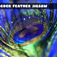 Peacock Feather Jigsaw Online